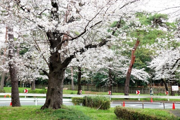 大宮公園に接した カフェ店_d0150720_11022744.jpg