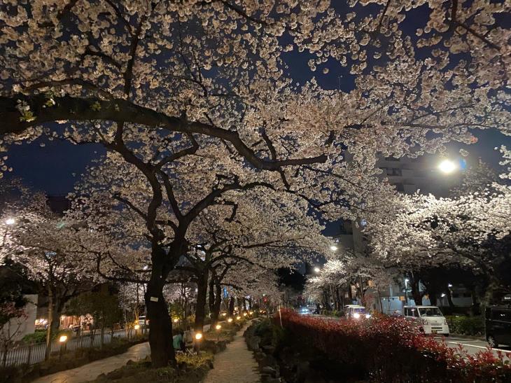 お花見散歩_c0190424_16545673.jpg