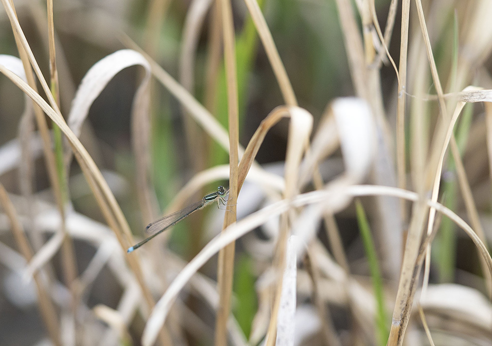 千葉の春の里山と自然公園_f0324026_18045837.jpg