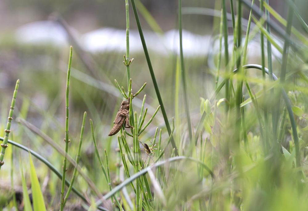 千葉の春の里山と自然公園_f0324026_18400161.jpg
