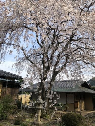 桜の樹の下で篠笛の音色_a0197730_22492613.jpeg
