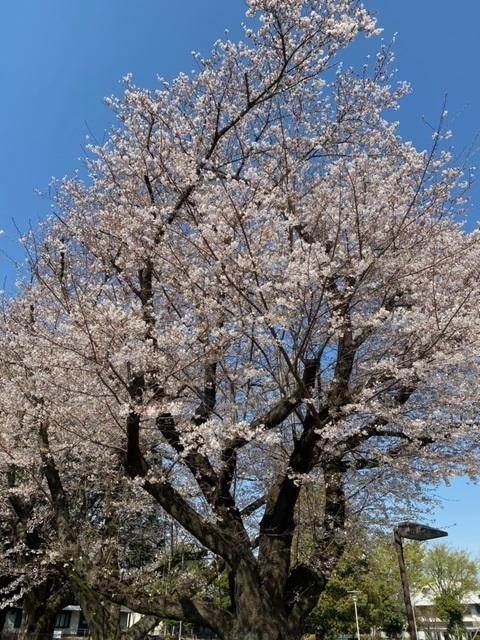 桜に誓う二年後。_e0177453_08412045.jpeg