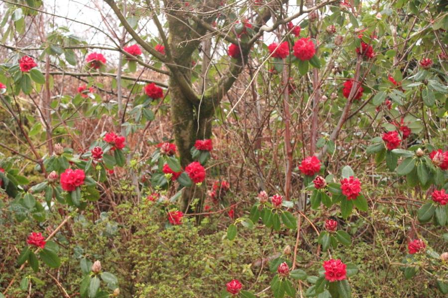 春がやってきました。_e0404157_06150186.jpg
