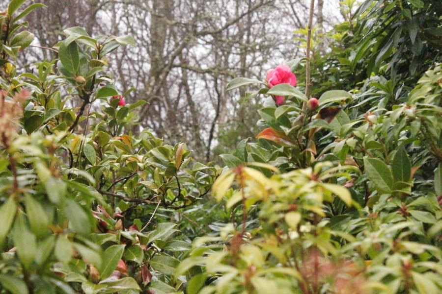 春がやってきました。_e0404157_06231149.jpg