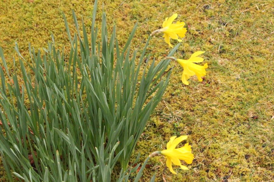 春がやってきました。_e0404157_06265862.jpg