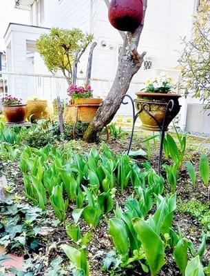 チューリップの咲く4月にショップ開催♪_b0194861_12544506.jpg