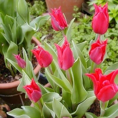 チューリップの咲く4月にショップ開催♪_b0194861_12561333.jpg