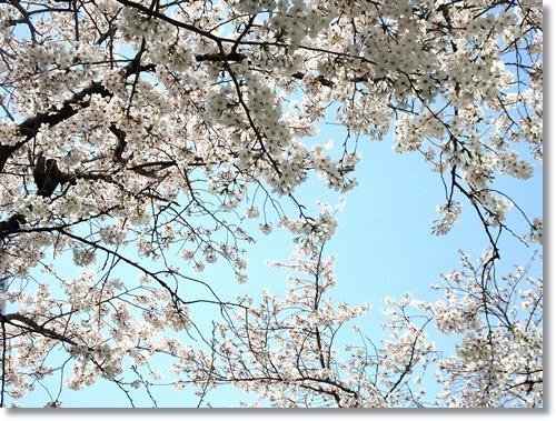 赤坂 迎賓館赤坂離宮を見学_d0013068_15402498.jpg