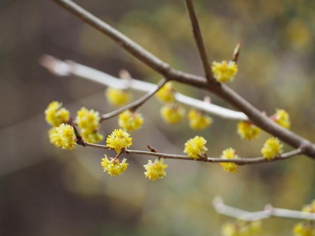 森に早春を告げる 小さな黄色い花たち_d0360272_22172795.jpg