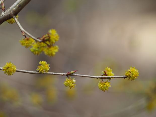 森に早春を告げる 小さな黄色い花たち_d0360272_22174520.jpg