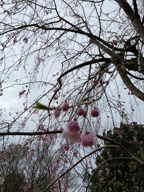 2021年3月28日 箱根 熱海 湯河原 熱海_b0098584_22510950.jpeg