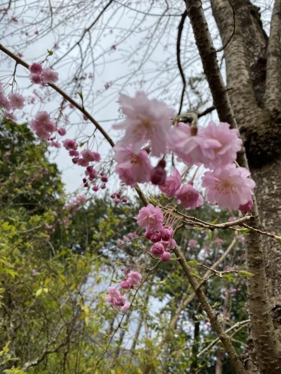 2021年3月28日 箱根 熱海 湯河原 熱海_b0098584_22512926.jpeg