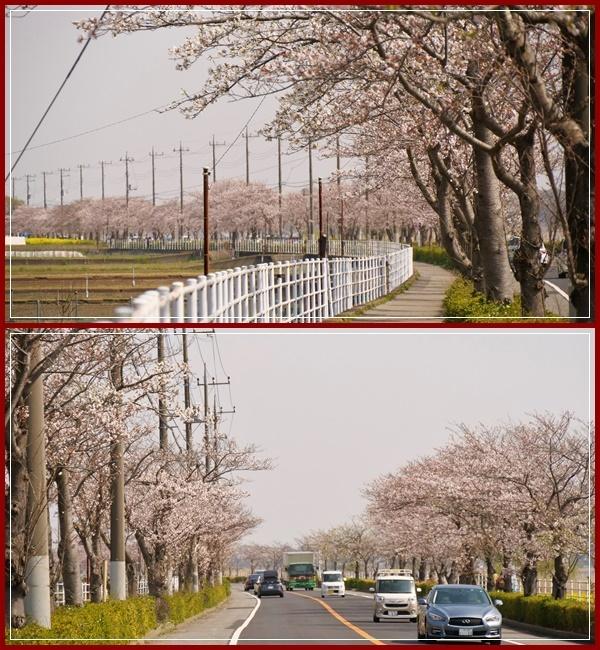 春は本当に良いですねぇ~!(^^)!_b0364186_18315613.jpg