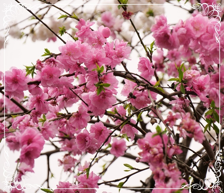 春は本当に良いですねぇ~!(^^)!_b0364186_18342709.jpg