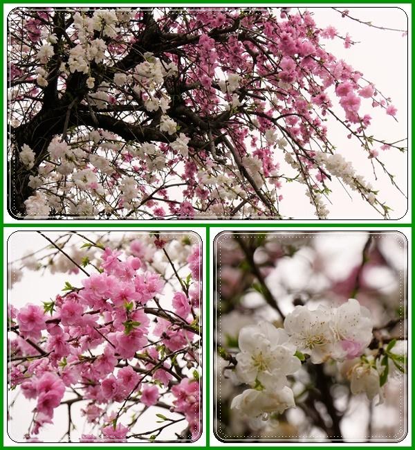春は本当に良いですねぇ~!(^^)!_b0364186_18345888.jpg