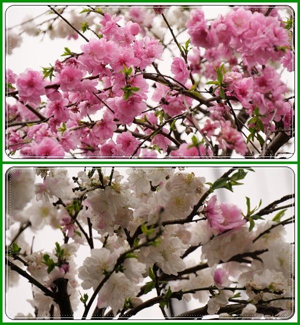 春は本当に良いですねぇ~!(^^)!_b0364186_18350942.jpg
