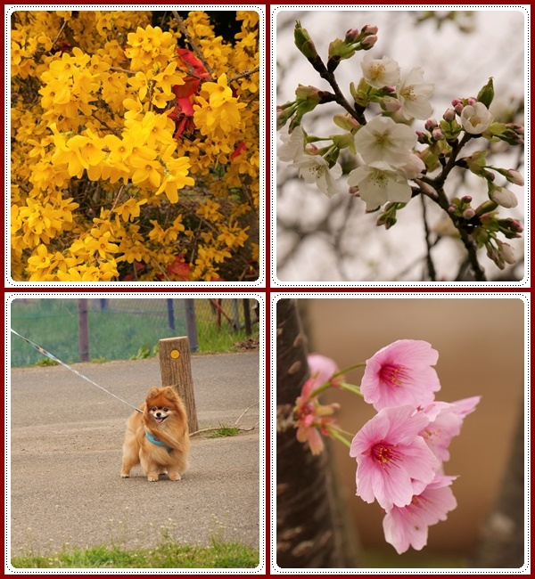 春は本当に良いですねぇ~!(^^)!_b0364186_18532752.jpg