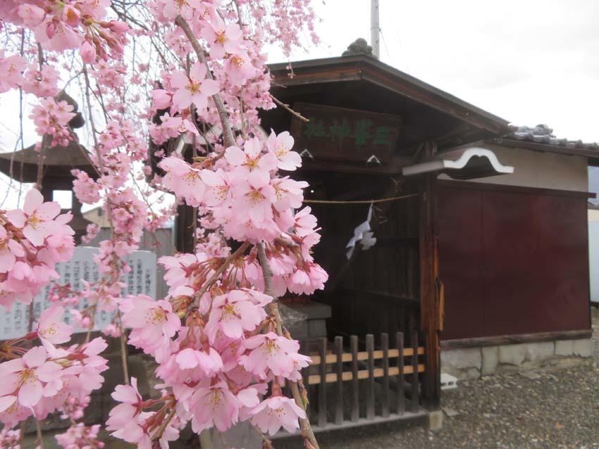 桜情報2_f0014205_09543232.jpg