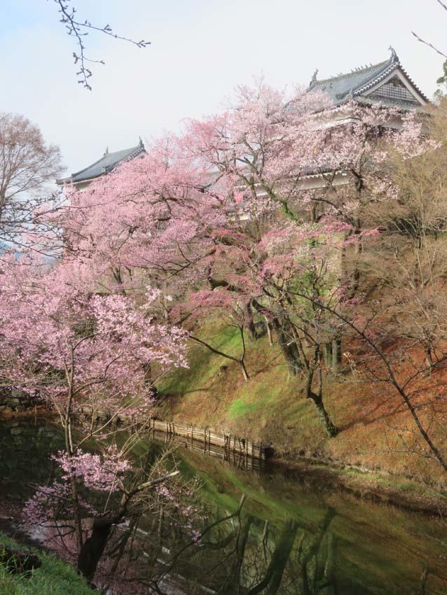 桜情報3_f0014205_14395972.jpg