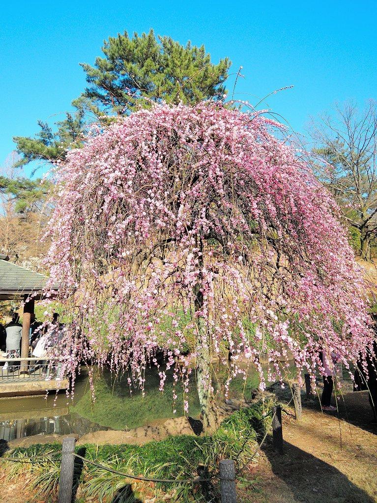 ある風景:Okurayama, Yokohama@2021 Spring #3 /fin_d0393923_21453774.jpg