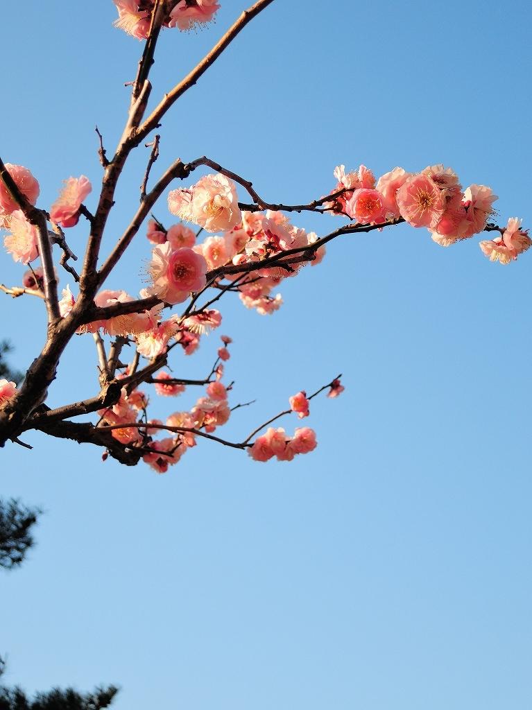 ある風景:Okurayama, Yokohama@2021 Spring #3 /fin_d0393923_21453803.jpg