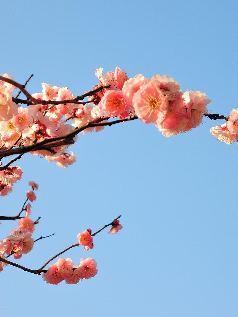 ある風景:Okurayama, Yokohama@2021 Spring #3 /fin_d0393923_21453835.jpg