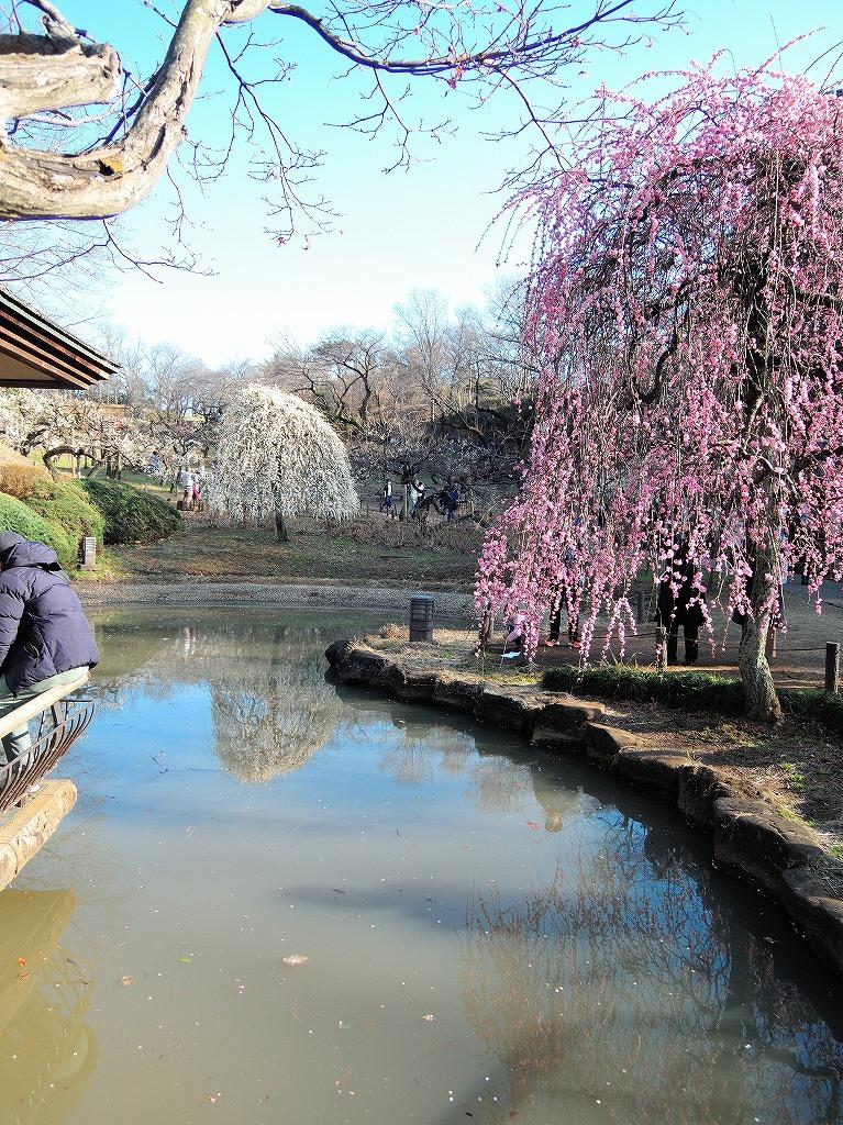 ある風景:Okurayama, Yokohama@2021 Spring #3 /fin_d0393923_21453857.jpg