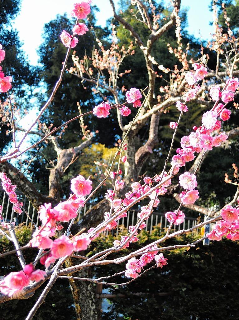 ある風景:Okurayama, Yokohama@2021 Spring #3 /fin_d0393923_21453868.jpg
