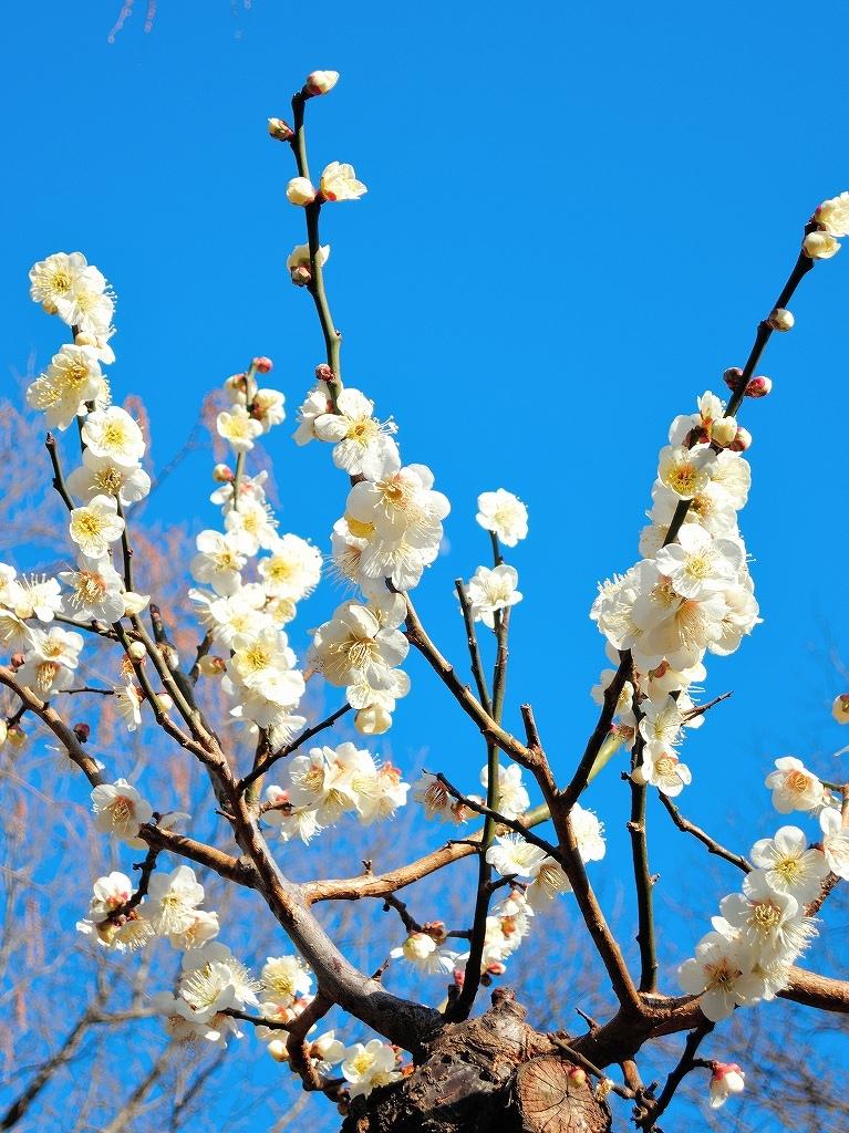 ある風景:Okurayama, Yokohama@2021 Spring #3 /fin_d0393923_21454707.jpg