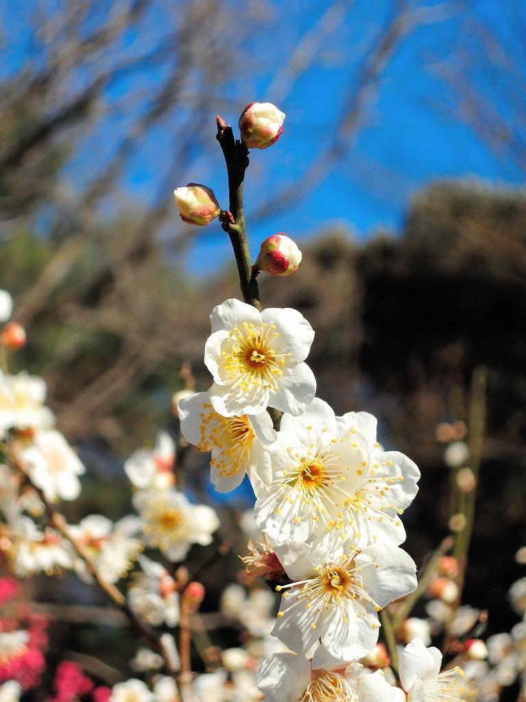 ある風景:Okurayama, Yokohama@2021 Spring #3 /fin_d0393923_21454767.jpg