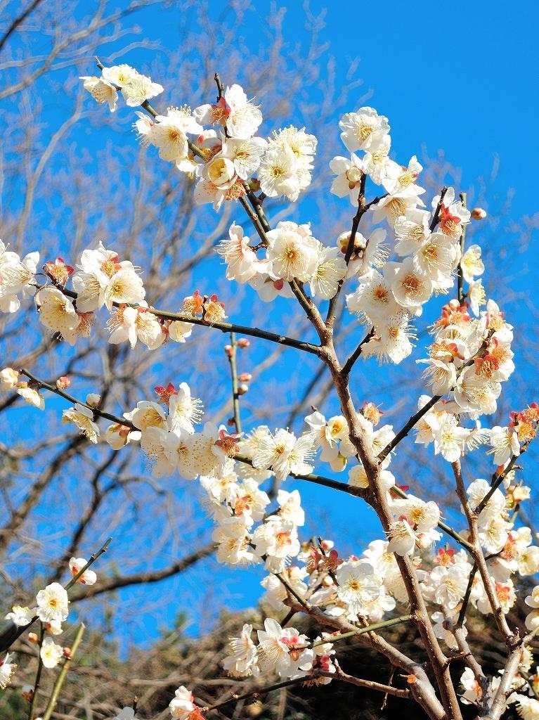 ある風景:Okurayama, Yokohama@2021 Spring #3 /fin_d0393923_21454810.jpg