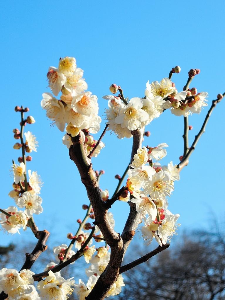 ある風景:Okurayama, Yokohama@2021 Spring #3 /fin_d0393923_21454856.jpg
