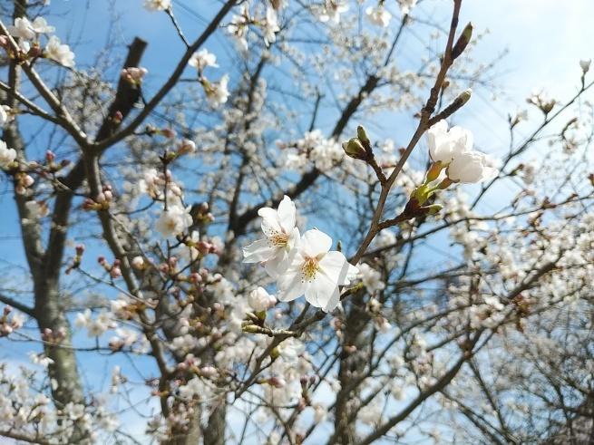 春の訪れ♡_c0173826_07151047.jpg