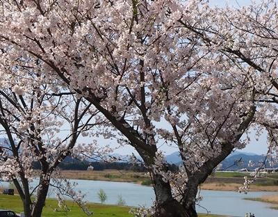 近場でお花見_f0129726_17462907.jpg