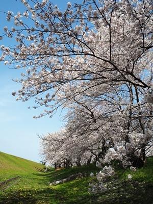 近場でお花見_f0129726_17463208.jpg