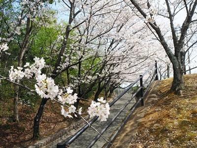 近場でお花見_f0129726_18043945.jpg