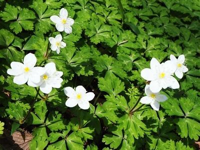 近場でお花見_f0129726_18045229.jpg
