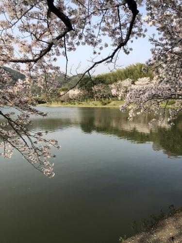 桜の樹の下で〜 篠笛の音色part2_a0197730_22105944.jpeg