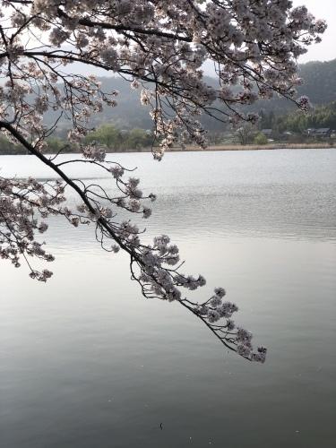 桜の樹の下で〜 篠笛の音色part2_a0197730_22221766.jpeg