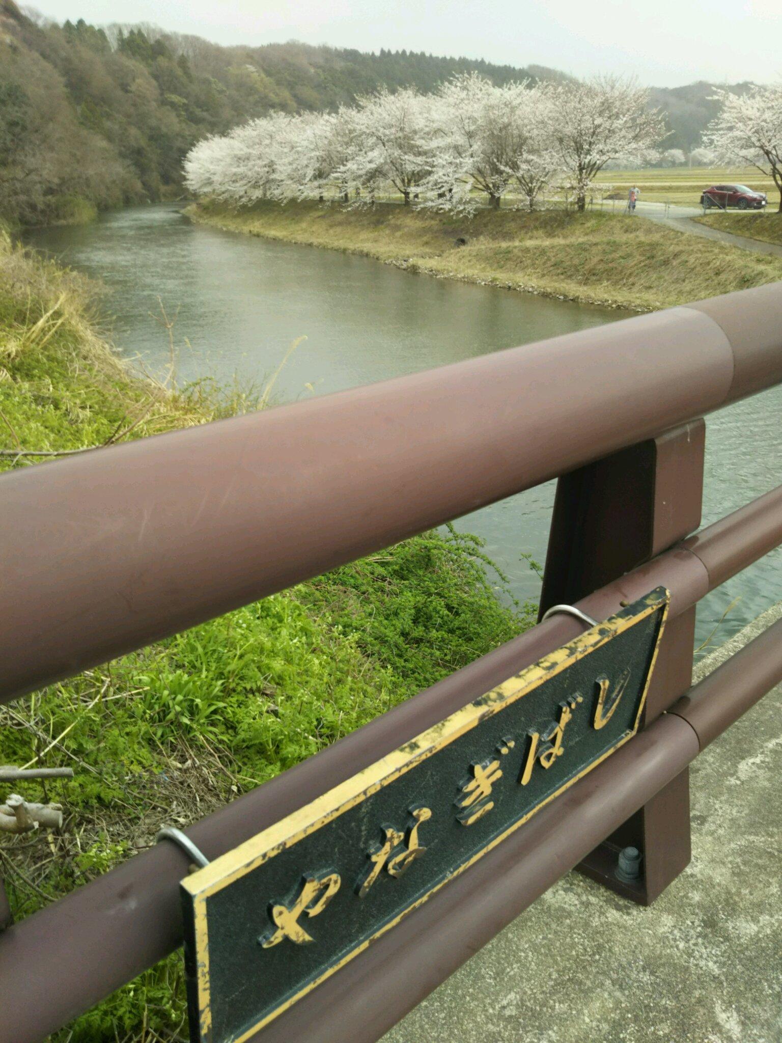 桜満開です。_f0040734_22471363.jpg