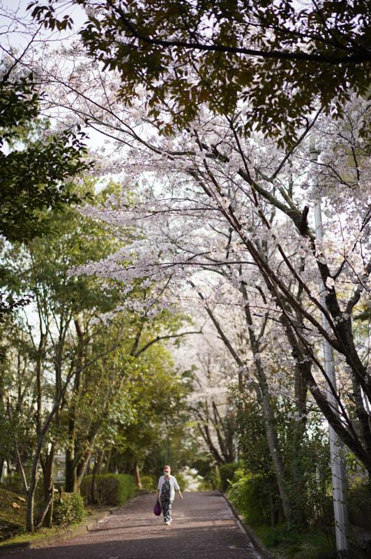 桜_f0167977_16000520.jpg