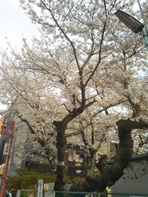 春満開_a0124393_13262018.jpg