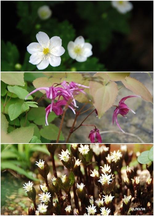 庭にも春が・・・、N叔母の事_c0051105_14142183.jpg