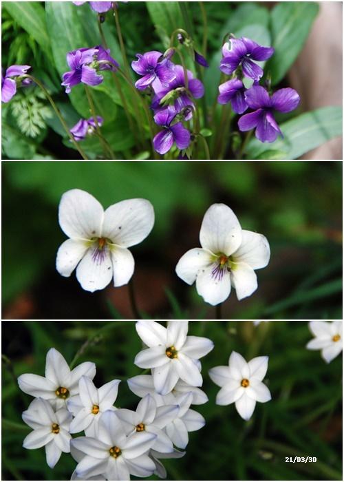 庭にも春が・・・、N叔母の事_c0051105_14152409.jpg