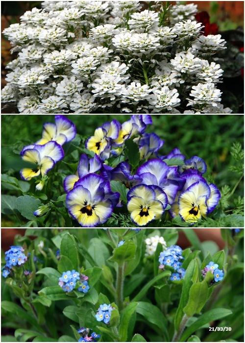 庭にも春が・・・、N叔母の事_c0051105_14165762.jpg