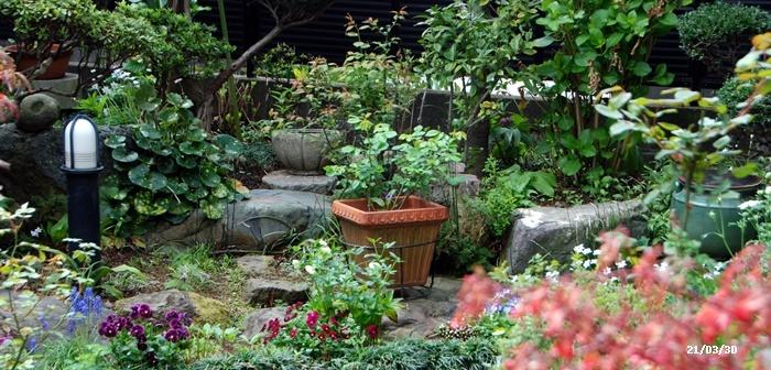 庭にも春が・・・、N叔母の事_c0051105_14232550.jpg