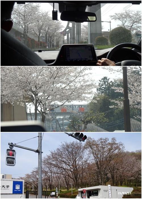 お花見、長池公園と近場でお花見_c0051105_19435573.jpg