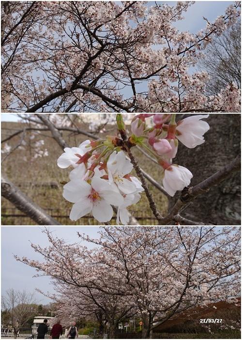 お花見、長池公園と近場でお花見_c0051105_19542591.jpg