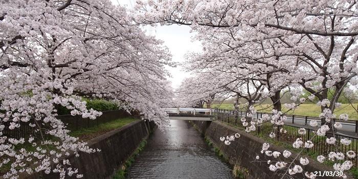 お花見、長池公園と近場でお花見_c0051105_22284213.jpg