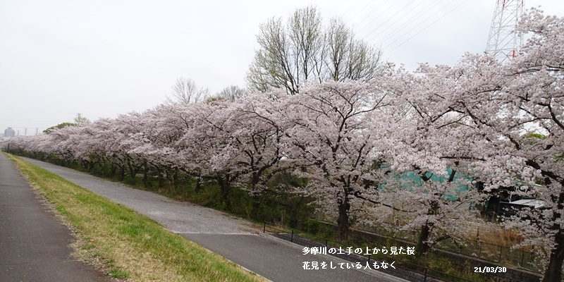 お花見、長池公園と近場でお花見_c0051105_22411231.jpg